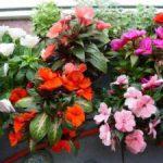 Как использовать цветы на балконе для дизайна