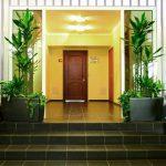 Озеленение офисов: комнатные растения для сада на рабочем месте и уход за ними (33 фото)