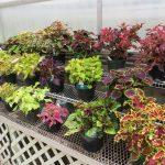 Чем нужно подкармливать комнатные растения, чтоб они цвели лучше?