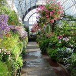 Как создать зимний сад и какие цветы и растения там посадить (25 фото)