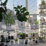 Самые опасные комнатные растения для детей