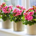 Средство, от которого Ваши растения будут расти как на дрожжах