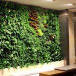 Растения для вертикального озеленения внутри помещения (40 фото)