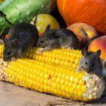 Чем отмыть клей от мышей с пола: советы эксперта