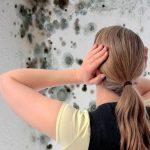 Грибок под полом в частном доме: как избавиться