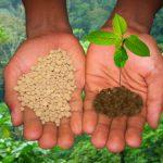 Правильное удобрение почвы