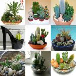 Цветущие и обычные кактусы в интерьере и уход за ними (36 фото)