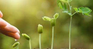 агросопровождение