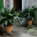 9 лучших комнатных растений для городских жителей